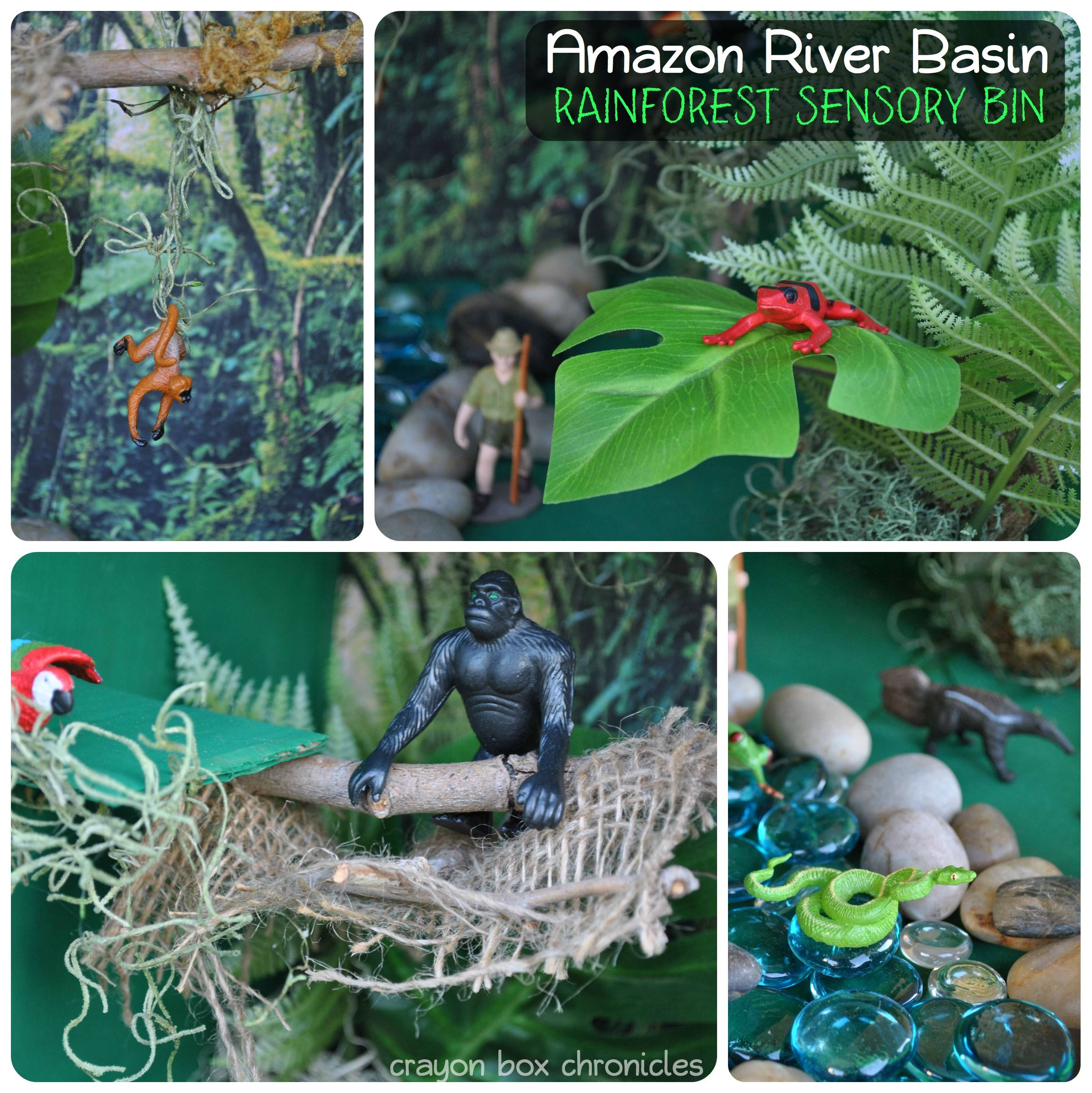 Rainforest Small World Amazon River Basin