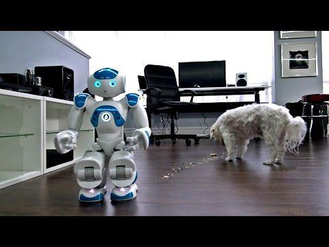 Robot + Perro = Amigos? | AMO MI PERRO - Videos