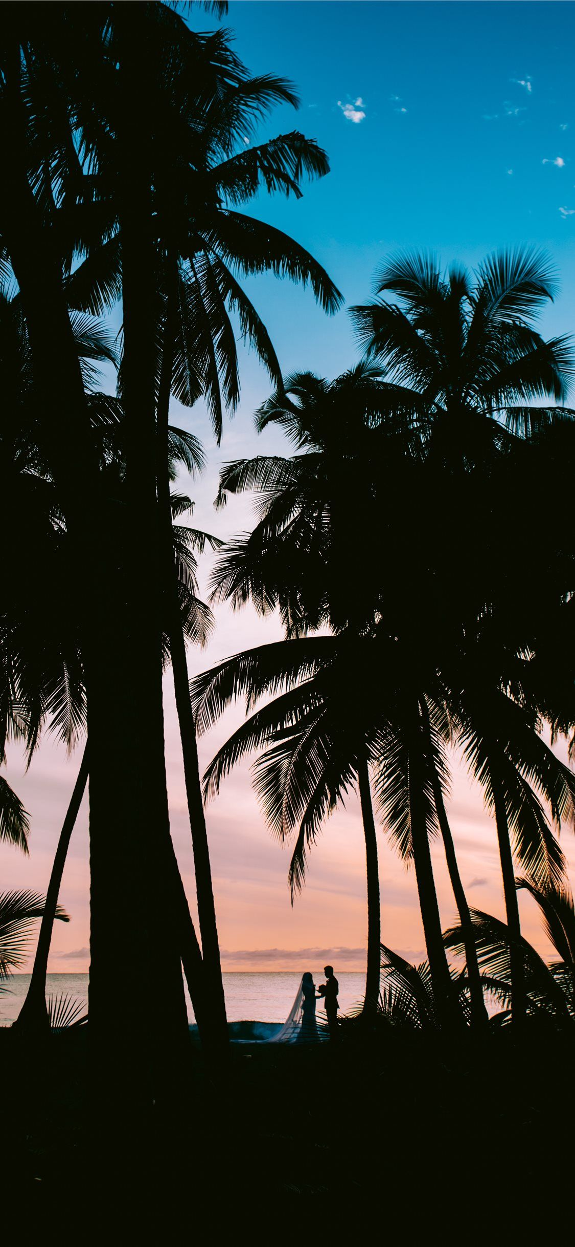 Free download the silhouette photography of coconut palm
