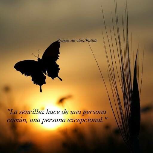 Frases Frases Mariposas Frases Reflexion Y Frases De Amor