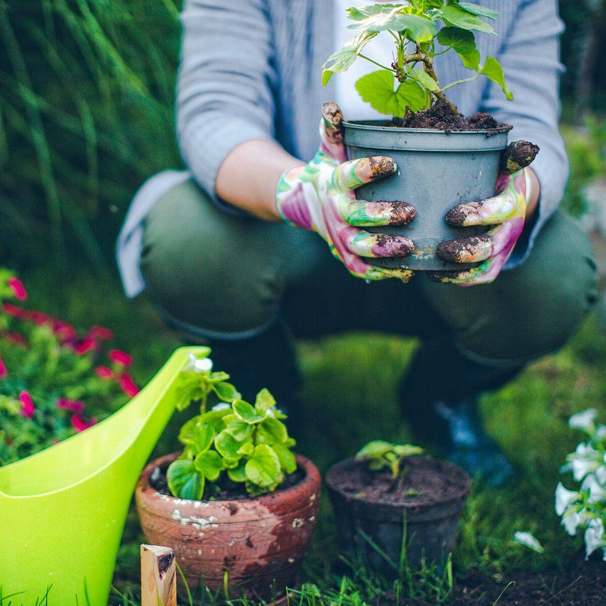 Where To Buy Gardening Supplies Near Me
