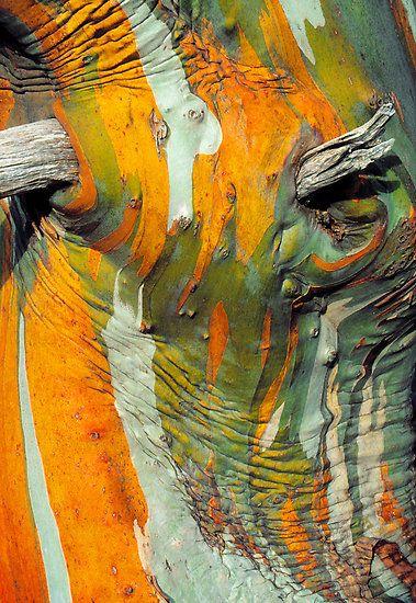 Snow Gum Bark by Ern Mainka Écorce d arbre, Abstrait