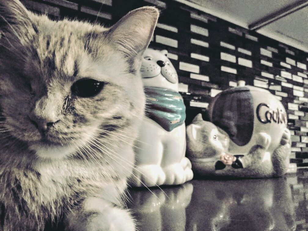 Cat selfie with the cat jars