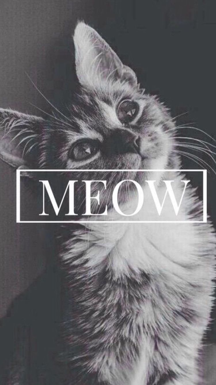 Meow Cute Cat IPhone 6 Wallpaper