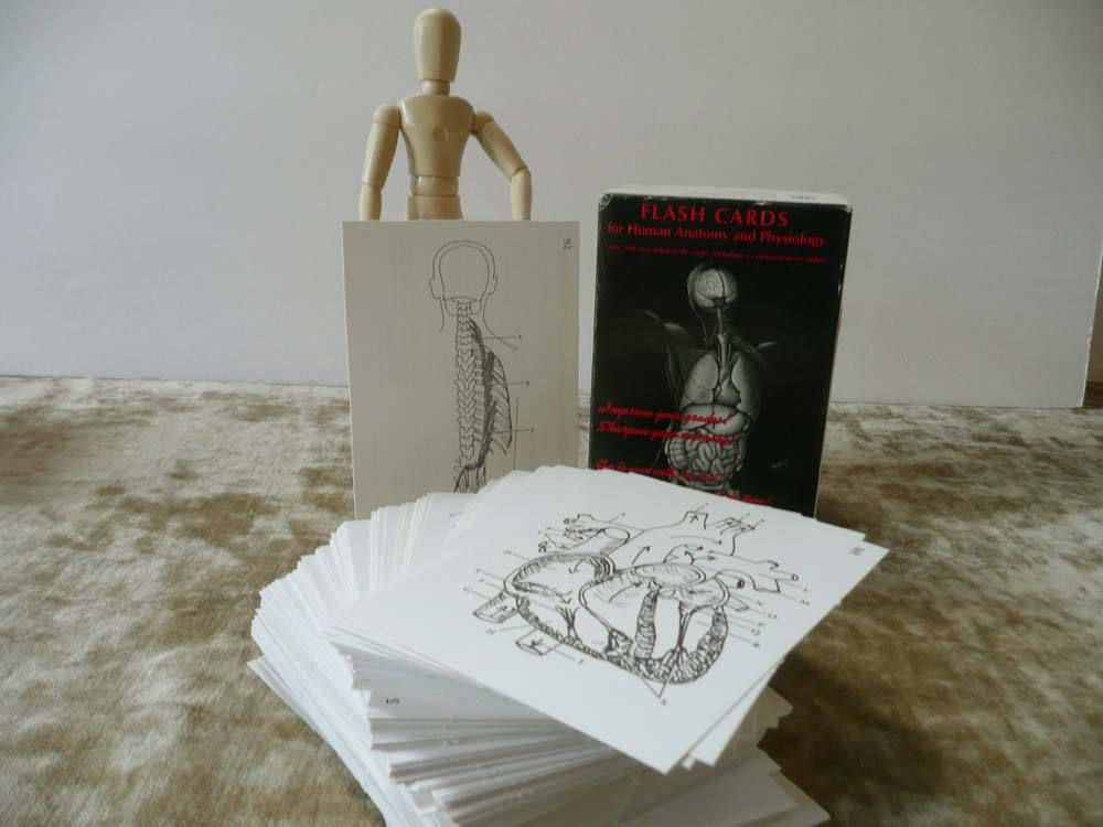 Unusual Vintage Flash Cards For Human Anatomy And Physiology - Over ...