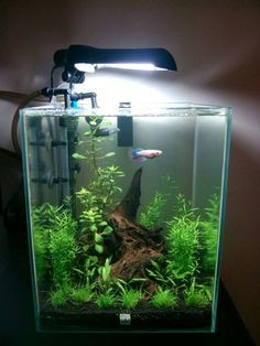 Lovely Fluval Chi 5G New Scape And Filter   The Planted Tank Forum