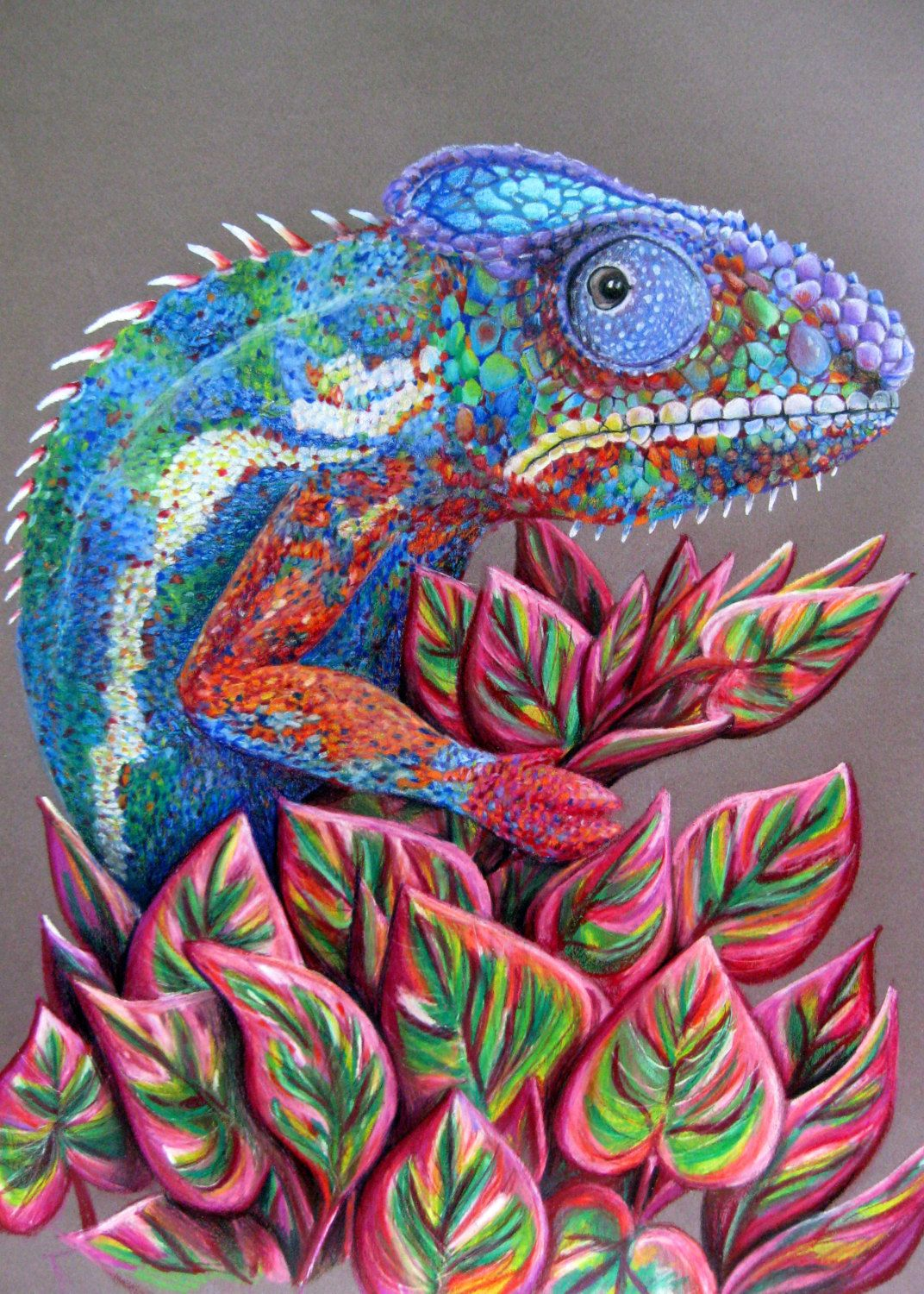 Amazing Colored Pencil Drawing Of A Chameleon On By