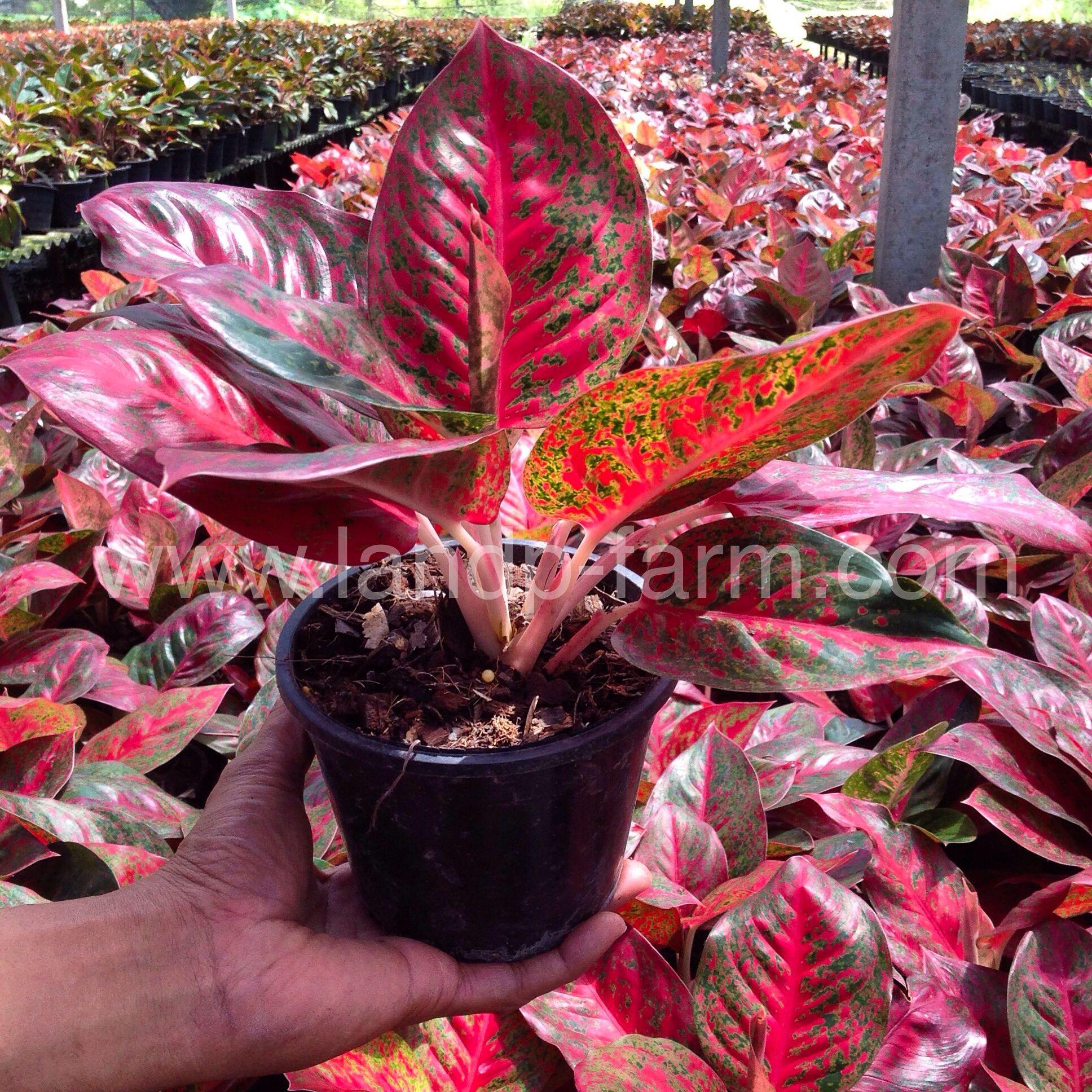 Taman Bunga Anggrek Ragunan