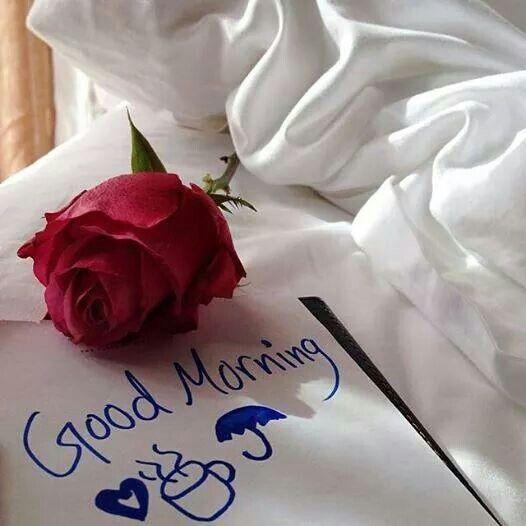 Good Morning Red Rose Flowers Saludos De Buenos Dias Buenos