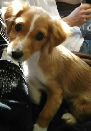 Adopt Jlo A Lovely 4 Months 2 Days Dog Available For Adoption At