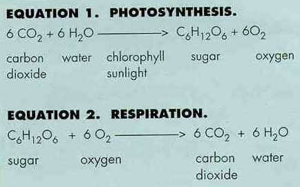 Biological Processes And Systems Photosynthesis And Cellular Respiration Photosynthesis Photosynthesis Worksheet