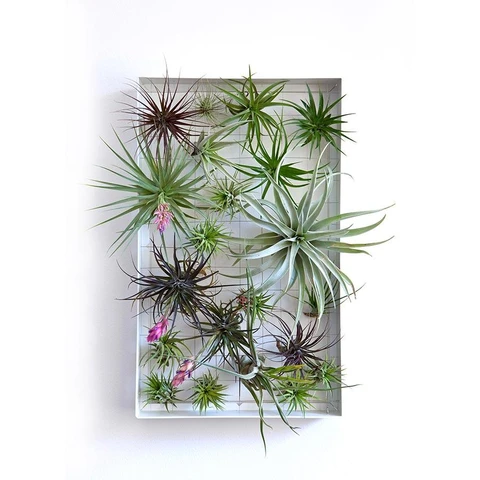 Air Plant Frame Rectangle in 2020 (With images) Air