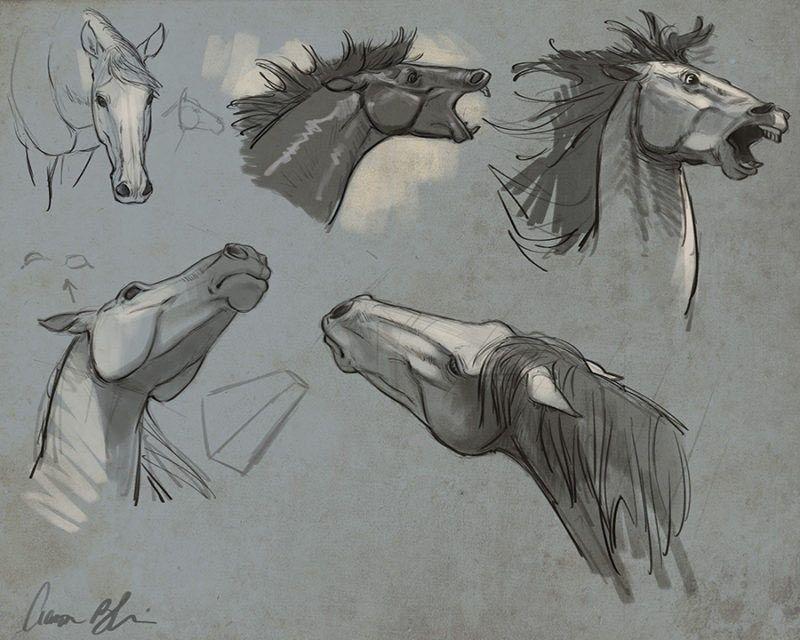 Horse anatomy head studies by Aaron Blaise. | Artsy | Pinterest ...