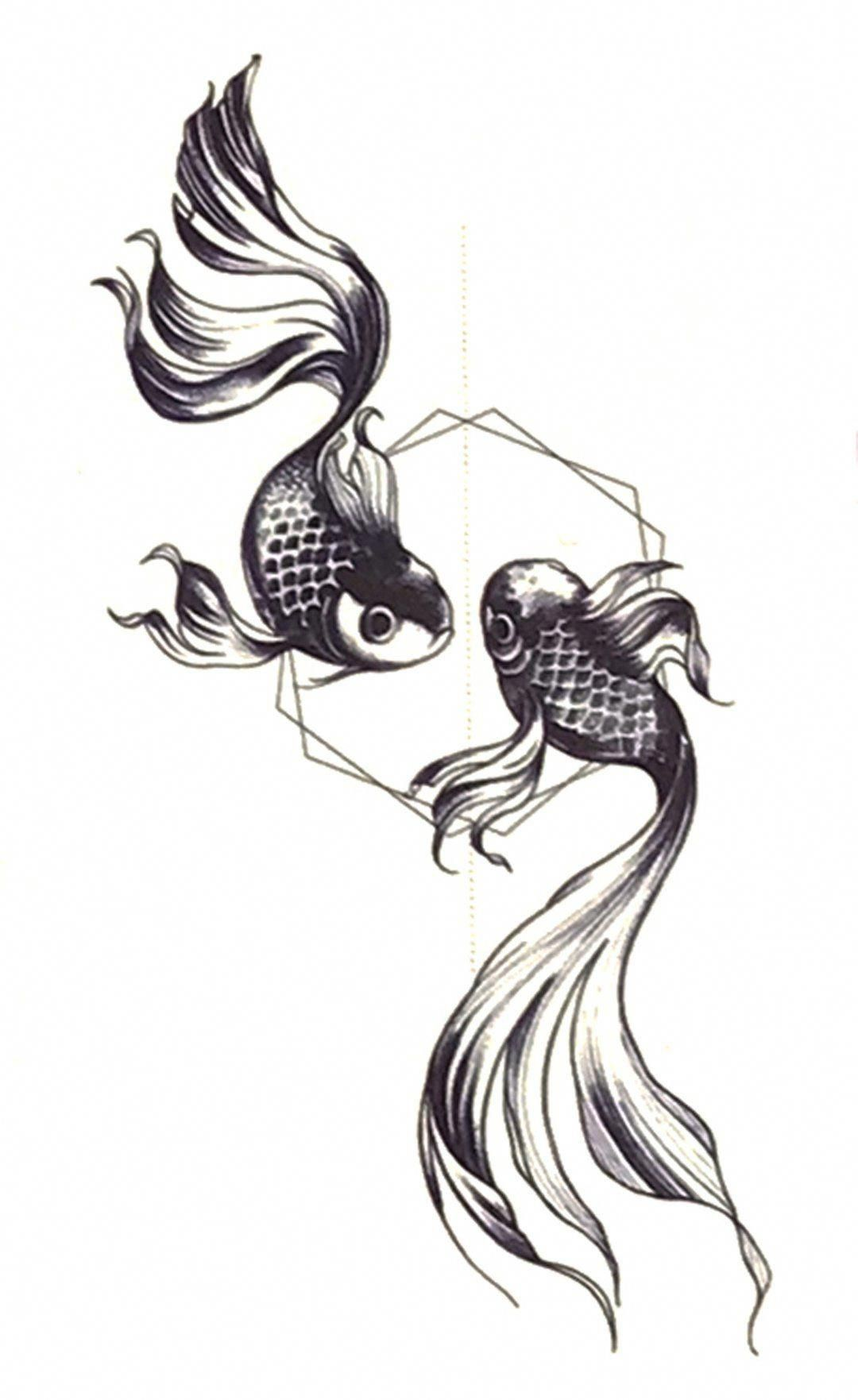Koi Fish Information
