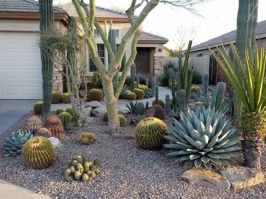 My Front Yard Garden Cactus Amenagement Jardin Decoration