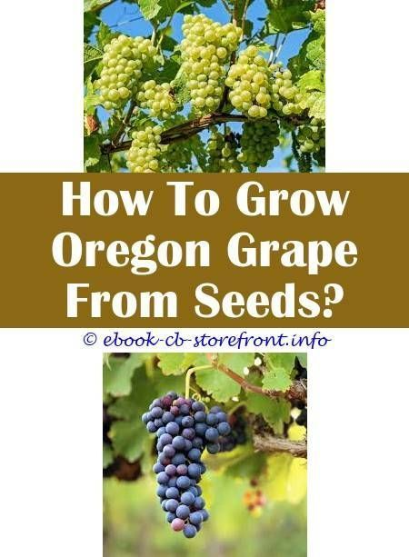 How Much Do Grape Vines Grow In A Year  Grape Growing Inside Another Grape 5 Igrape