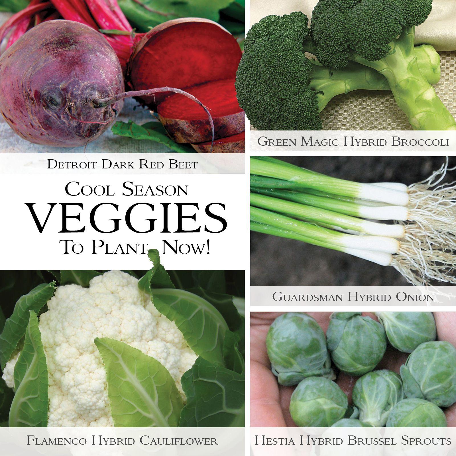 Cool Season Veggies To Plant Now Veggies Healthyrecipes Gardening Dieting Healthy Growing Vegetables Vegetable Seed Vegetable Seeds For Sale