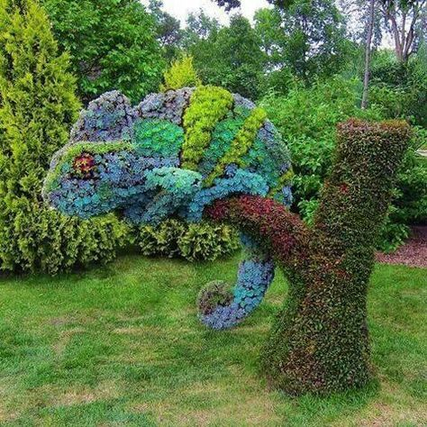 Succulents topiary in the shape of a Chameleon. Montreal Botanical Gardens #botanicgarden