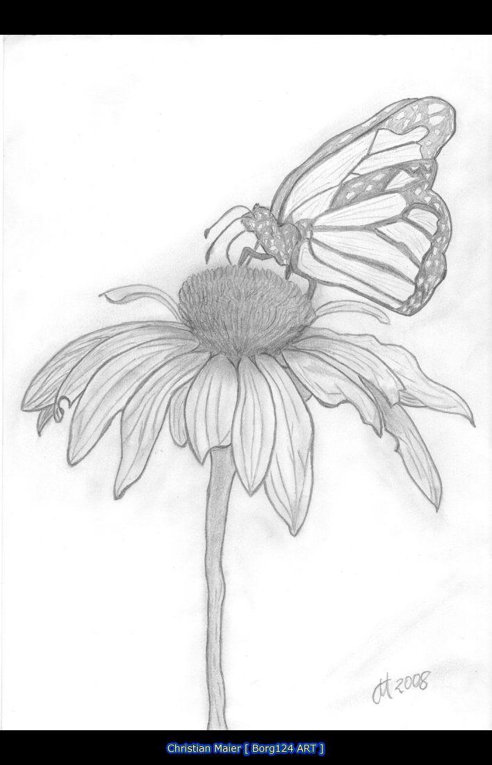 Butterflies on flower skectches butterfly on flower jpg