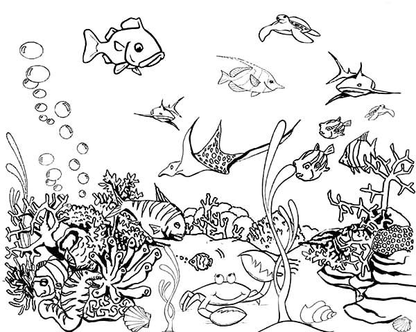 Tropical Fish Tank Coloring Page Netart Fish Coloring Page Tropical Fish Tropical Fish Tanks