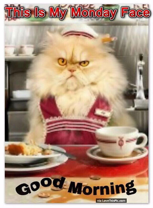 50 Funny Monday Quotes Crazy cats, Funny animals, Funny