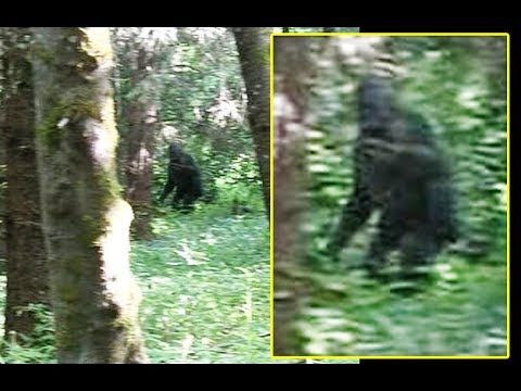 New Bigfoot Photo from Matt Moneymaker - ANALYSIS ...