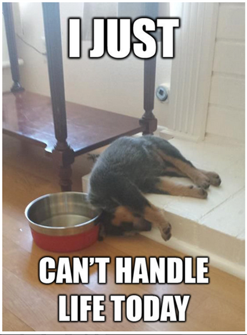 50 Funniest Dog Memes That Will Keep You Laughing For Hours Funny Dog Memes Funny Animal Memes Funny Animals