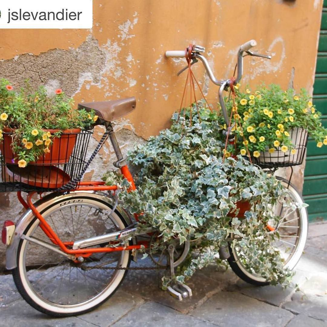 We always love these bicycle pictures while traveling.  Today we are featuring our friend's beautiful capture.  Please visit @jslevandier amazing gallery. @repostapp.  Love Lucca  #italy #italia #tuscany #toscana #discovertuscany #tuscanypeople #lucca #villagelife #volgoitalia #italy_photolovers #top_italia_photo #gardening #italian_places #travelpicsdaily #kings_villages #loves_united_italia #tv_travel #ig_italia #ig_tuscany #ig_europe #beautifulinstaphoto #europe_vacations #travellerau…