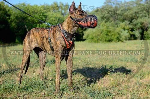 Great Dane Attack Training Leather Canine Muzzle With Easy