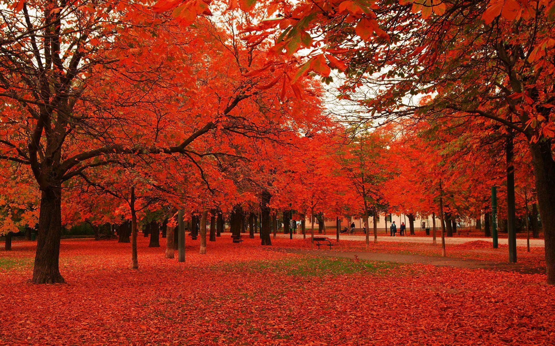 Autumn Is The Best Month Autumn Trees Nature Wallpaper Landscape Wallpaper