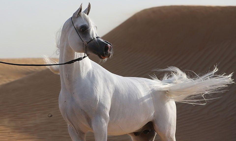 Arabian Essence