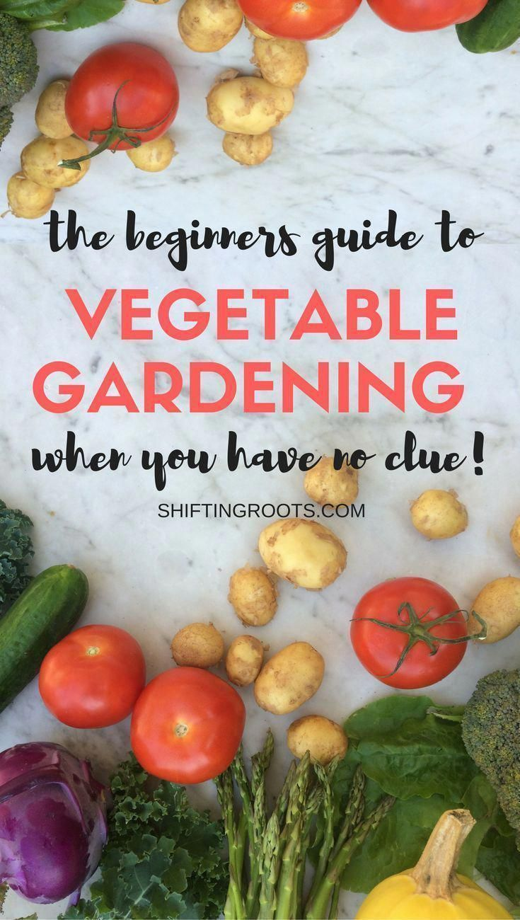 Finally A Beginners Guide To Growing A Vegetable Garden In 400 x 300
