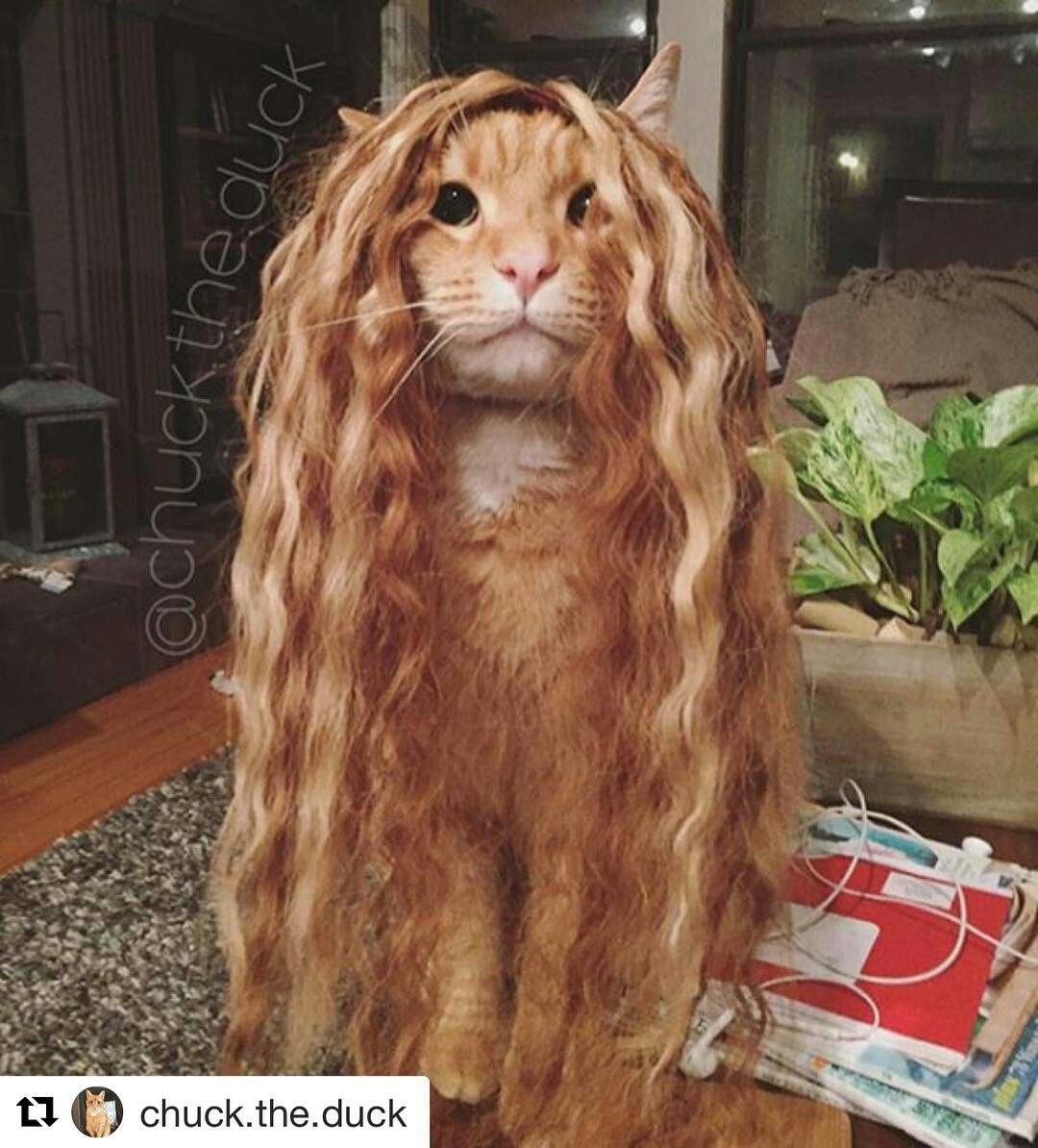Cat-punzel! If only we all had hair so luxurious!  sexyhair.com