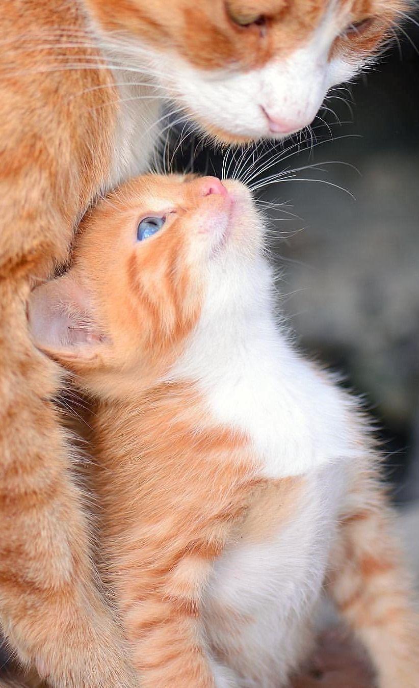King Collin S Cat Palace Public Group Facebook V 2020 G Detenyshi Zhivotnyh Milye Detenyshi Zhivotnyh Smeshnye Kotyata