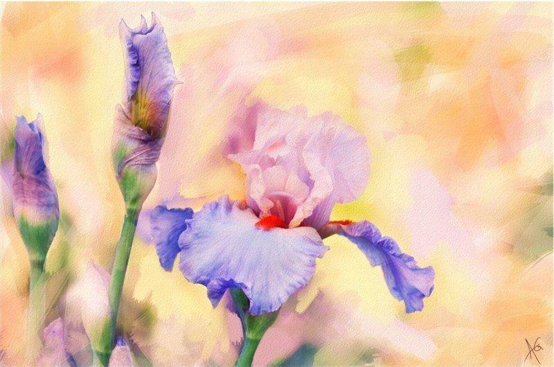 Открытка с цветами ирис, днем рождения