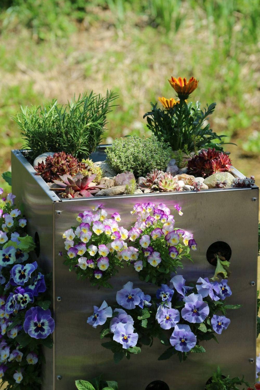 Blumen Fur Hochbeet Hochbeet Bepflanzen Tipps Fur Gemuse Blumen In 2020 Hochbeet Bepflanzen Hochbeet Krauter Pflanzen