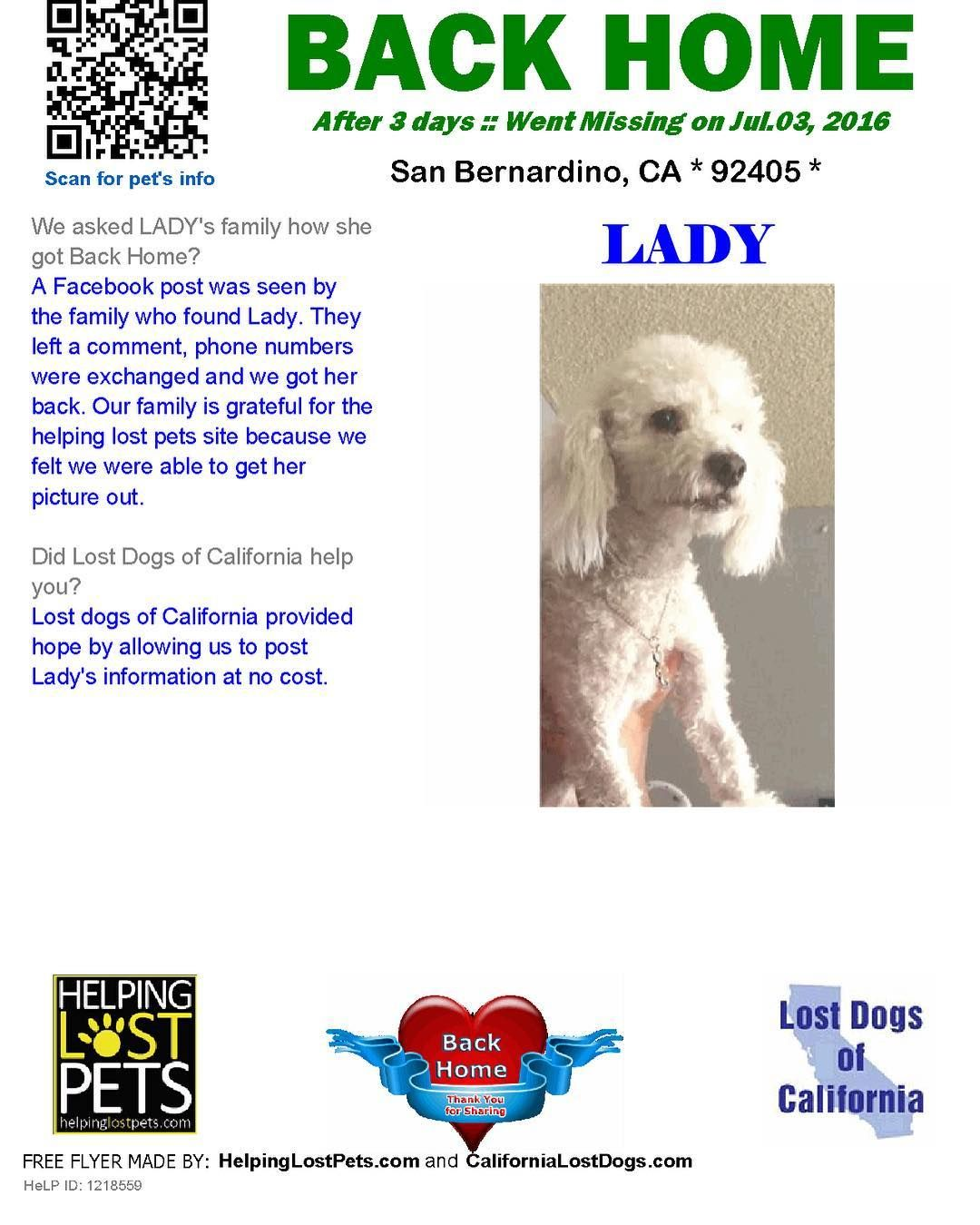 Backhome Lady Poodle From Sanbernardino Ca Has Been Reunited With Her Family Lost 7 3 16 Back Home 7 6 16 A Losing A Dog Losing A Pet Pets