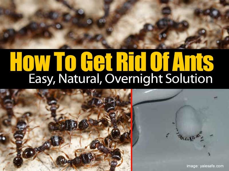 I Stay Away From Chemicals As Best I Can Sometimes We Forget That Some Of The Best Solutions Are Natural There Are Many Chem Get Rid Of Ants Rid Of Ants