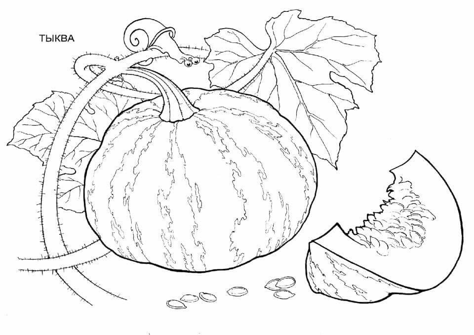 Pin by Lucia Hromadkova on ovocie | Pumpkin coloring pages ...