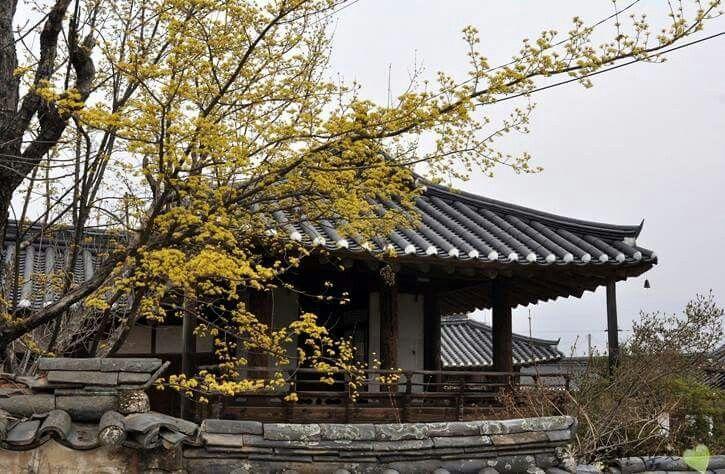 Unjoru in spring Gurye, Korea  운조루(雲鳥樓)의 봄