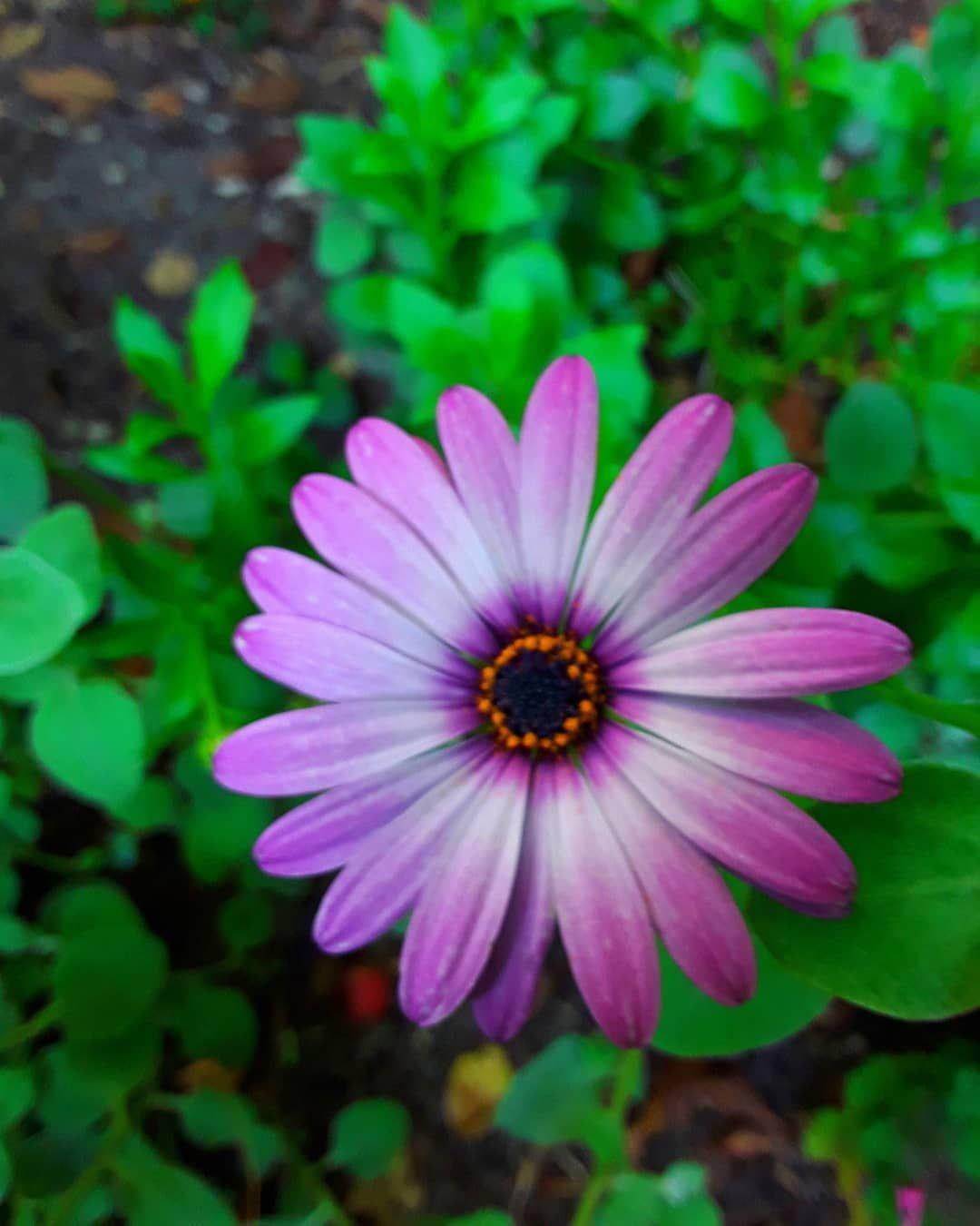 Jesienne Kwiaty W Ogrodzie Ogrodjoli Mojogrod Mojogrod Garden Gardenlovers Gardenlife Gardentime Warszawa Warsaw Ursynow Naursynowie Plants Garden