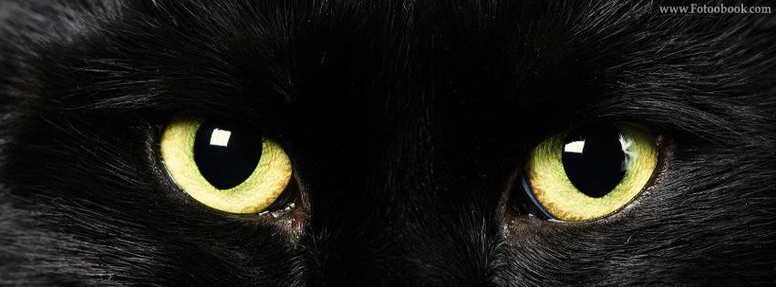 غلاف اسود 2017 اغلفه اسود ساده 722mosta2bal Png Black Cat Superstition Black Cat Cats