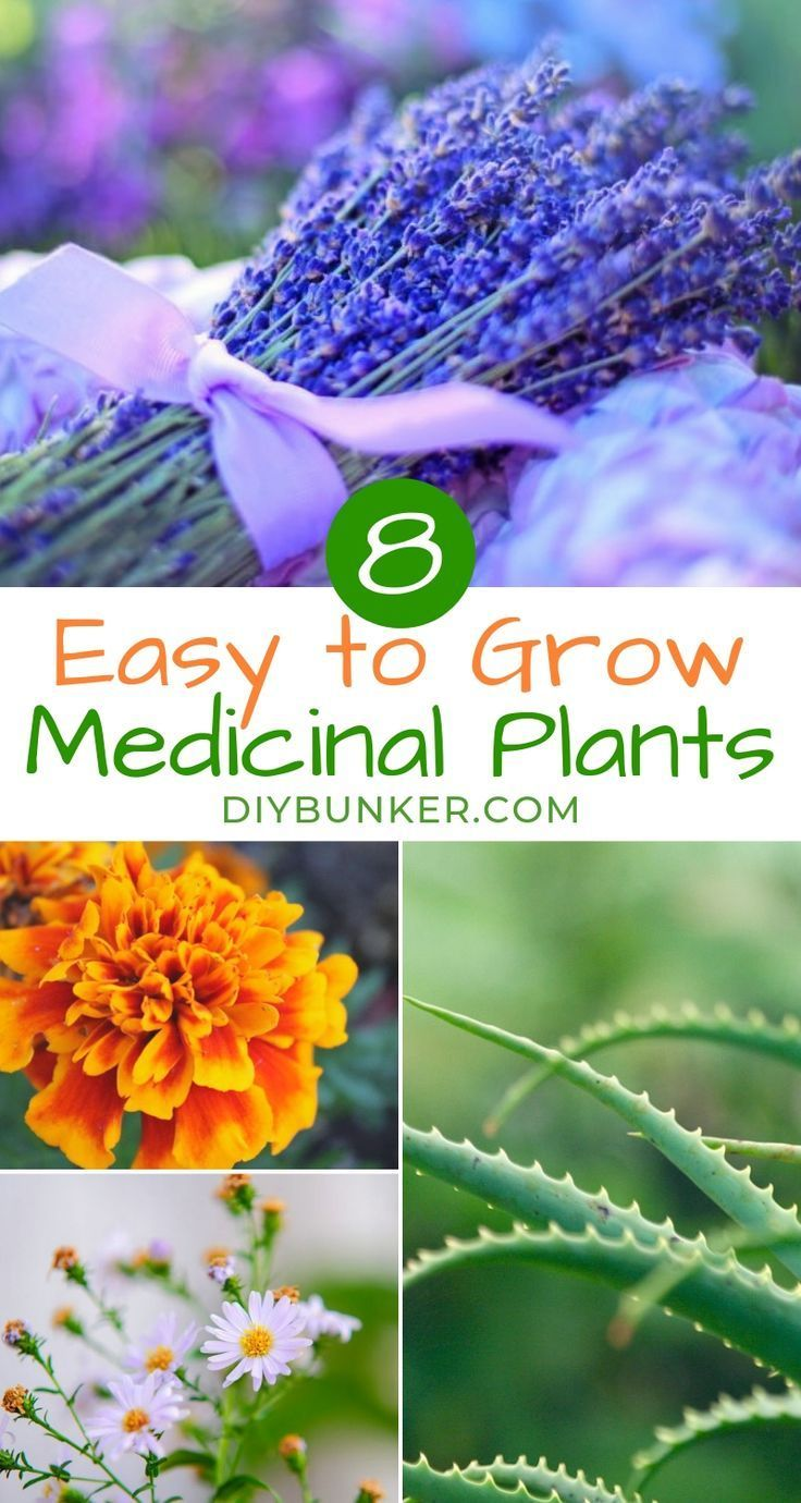 8 Medicinal House Plants Thatll Bring Life to Your Kitchen  If youre looking to learn how to grow a medicinal herb garden youre going to love these DIY