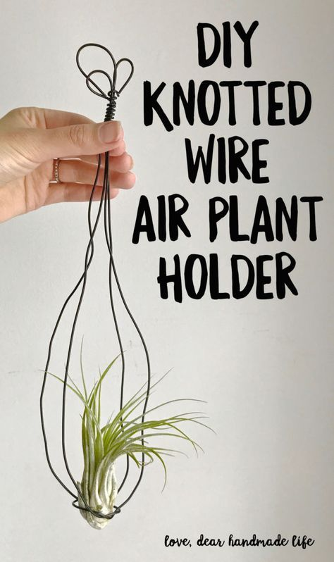 DIY Air Plant in a Vintage-inspired Hand-knotted Wire Hanger from ...
