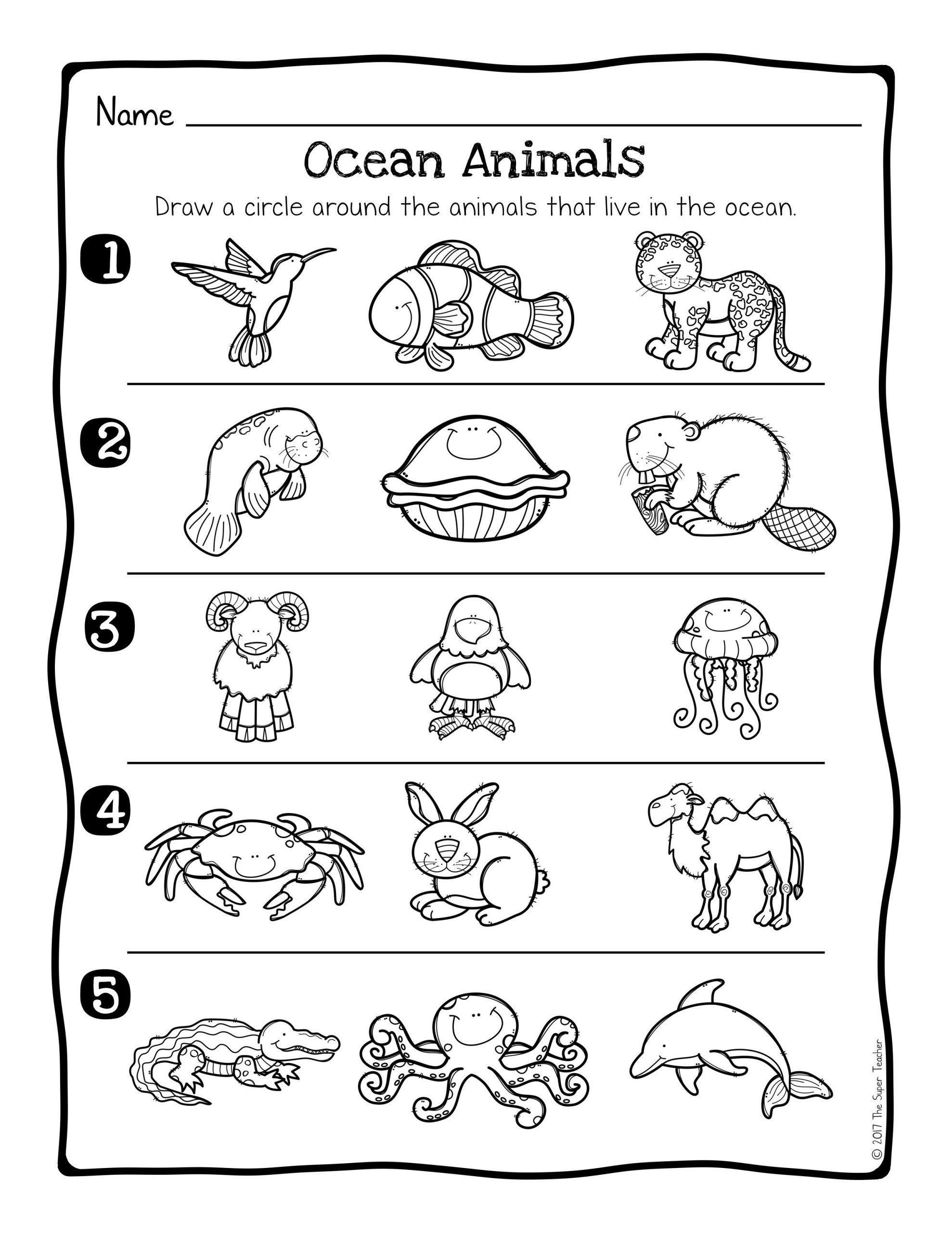 Kindergarten Ocean Worksheets Animal Habitats Science