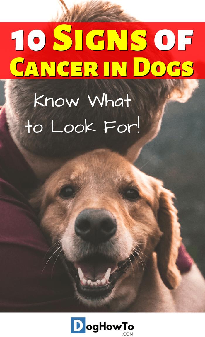 Pin On Dog Collar Ideas