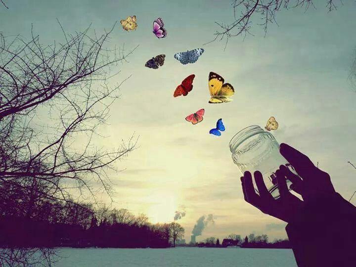 Deja volar tus sueños como si fueran mariposas.   Butterflies flying,  Butterfly, Beautiful butterflies