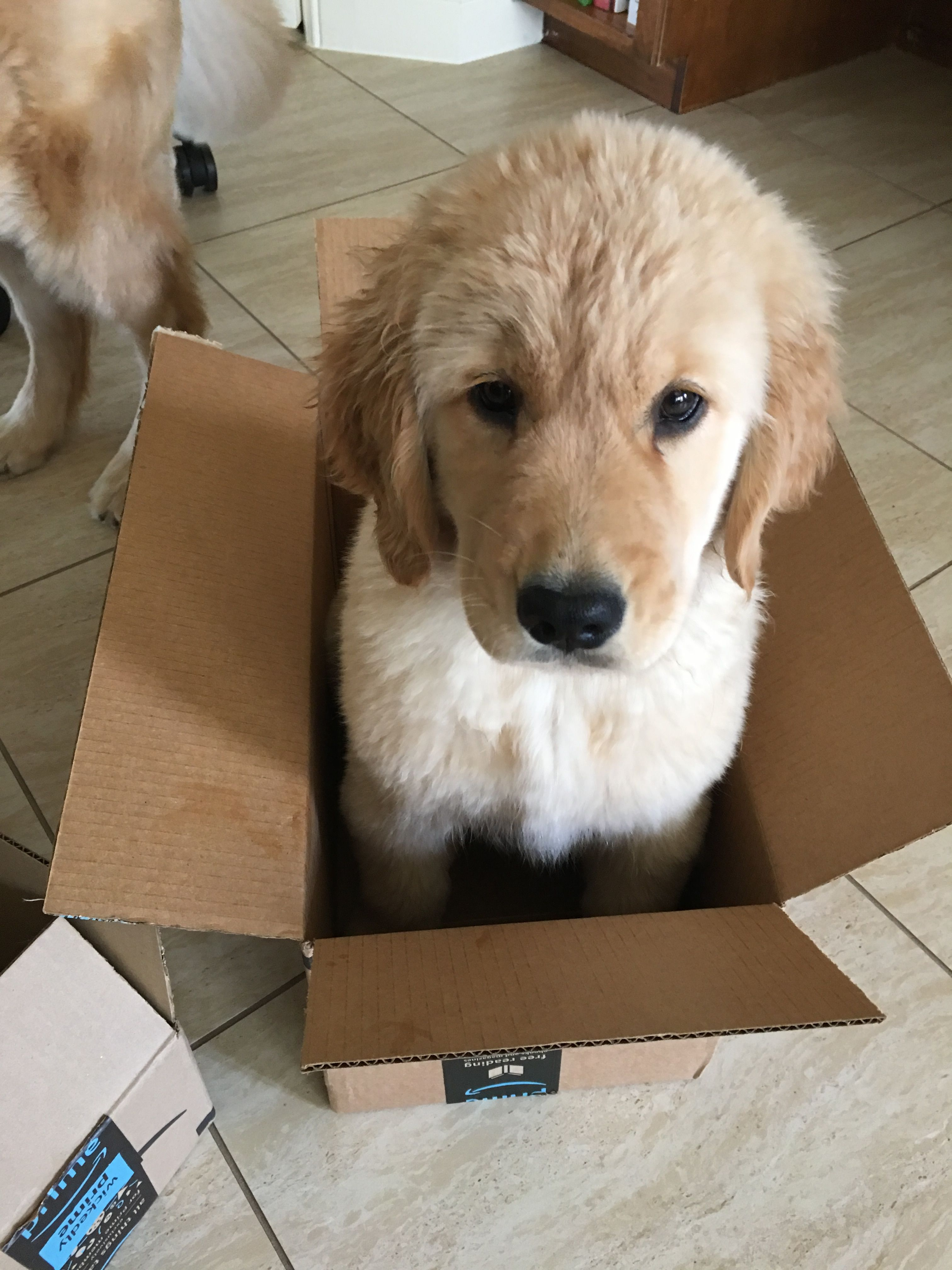 Puppy In A Box Puppies Dogs And Puppies Dogs