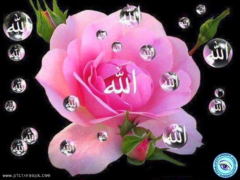 Beautiful Allah Picture Rose Soft Beauty Beautiful Roses