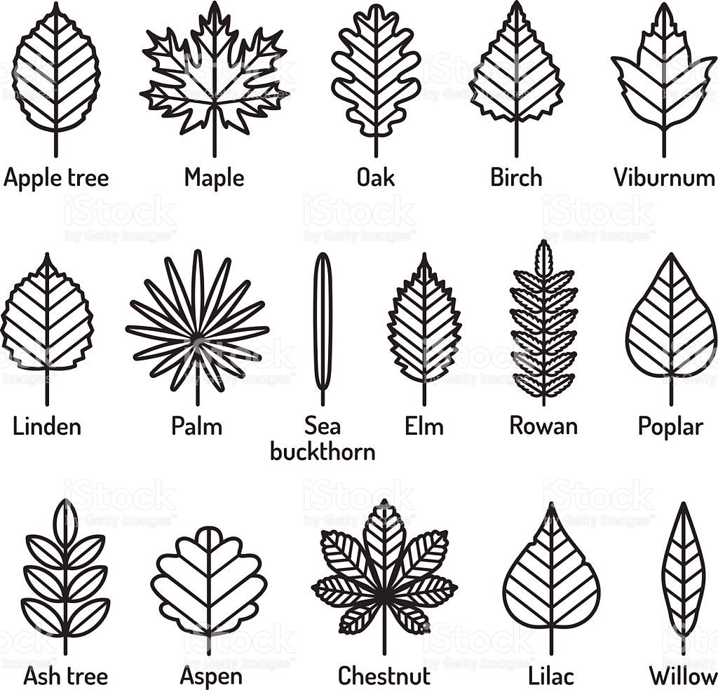 Leaves types with names icons vector set outline black